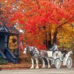 Carriage In The Fall